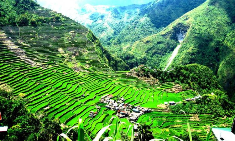 The terraces are found in the province of Ifugao and their culture revolves around rice