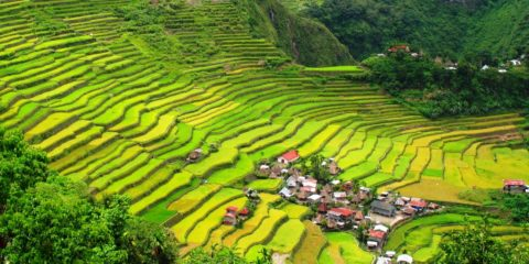 In March 2009 the Ifugao rice terraces were declared free from genetically modified organisms (GMO).
