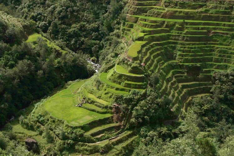 Moreover, tourism is another industry which is thriving in the Banaue Rice Terraces, developed number of activities for visitors.