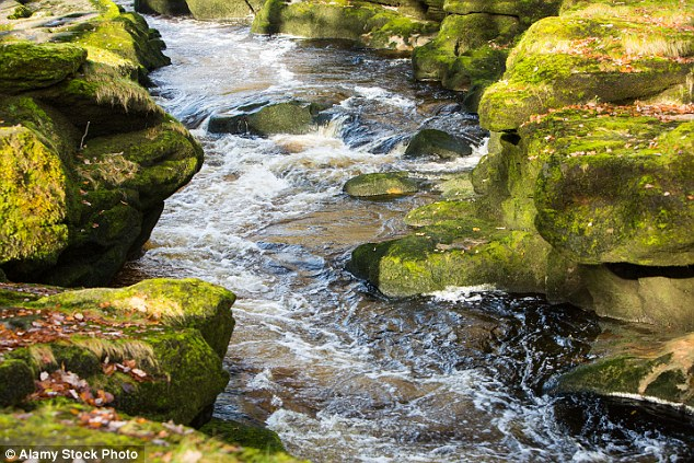 The thin gap on the Strid is only an illusion as both banks are extremely undercut, unseen underneath is a network of caverns and tunnels that hold all of the rest of the river's water.