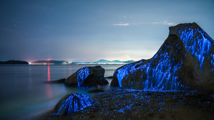 The series unique thing is the weeping stones is a photo series that eerie blue light emitted by a native species of bioluminescent shrimp.