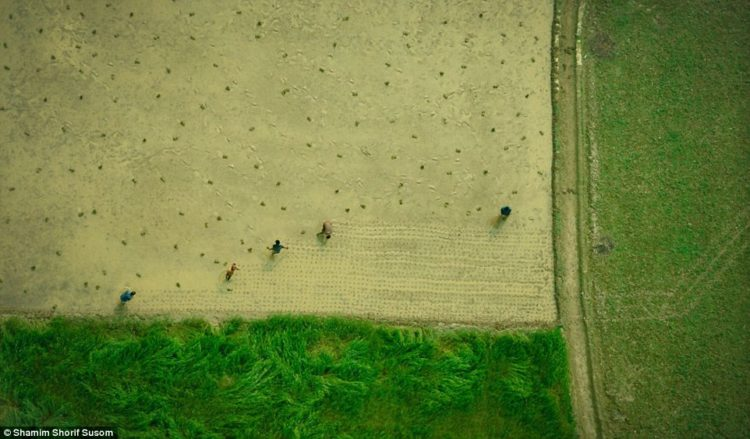Much of Susom's work features fishermen or villagers whose lifeline is the country's fertile farmland and paddy fields
