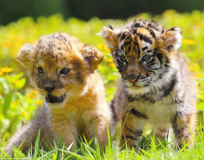 staff-at-the-zoo-have-been-sharing-these-adorable-photographs-over-the-last-few-weeks-making-thousands-of-people-coo-over-the-images