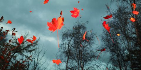 Red autumn leaves falling in the woods