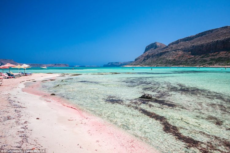 When the creatures die, they get washed up on to the beaches and blend in with the sand. Above, Balos lagoon on Crete