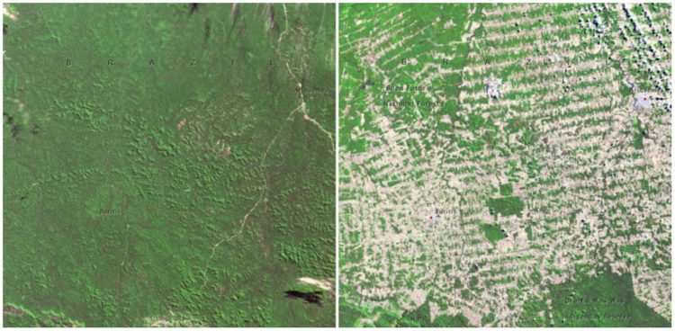 Forests in Rondonia, Brazil. June, 1975 — August, 2009.