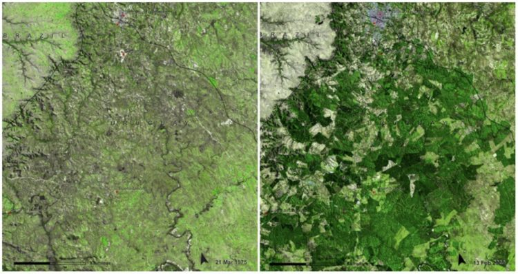 Uruguay Forests, March, 1975 — February, 2009. Uruguay has managed to grow its forested area from 45,000 hectares to 900,000 hectares.