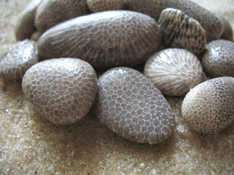 Petoskey stones are just chunks of coral reef, and when they dry the stone look like normal limestone but when wet or polished, the characteristic mottled pattern of the six-sided coral fossils emerges.