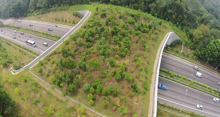 This wildlife ecoduct is located over a six-lane highway in Singapore and is dotted with trees and shrubs