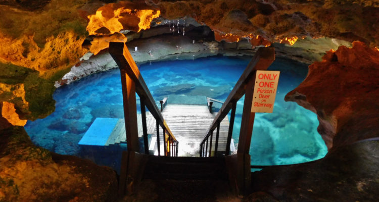 Devil's Den is a karst window, in which the roof over a subterranean river has collapsed, exposing the water to the open surface, near Williston, Florida.