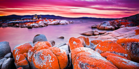 The lichens responsible for the orange hue in the rocks of Bay of Fires belong to the family Hymeneliaceae.