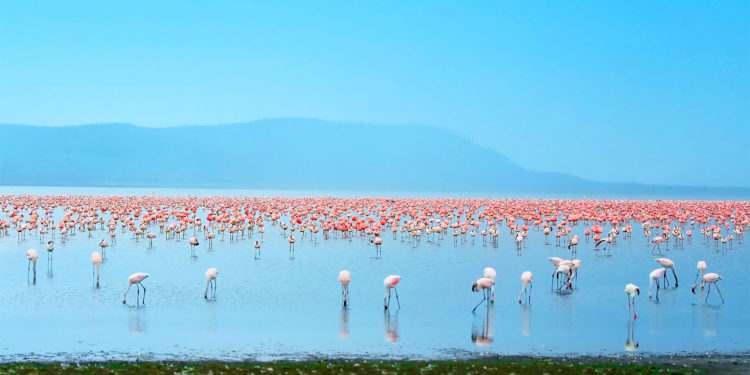 ke Nakuru is one of the Rift Valley soda lakes at an elevation of 1754 m above sea level.