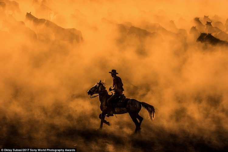 Turkish photographer Oktay Subasi captured this majestic image of a rancher amid a herd of horses cantering through the dust