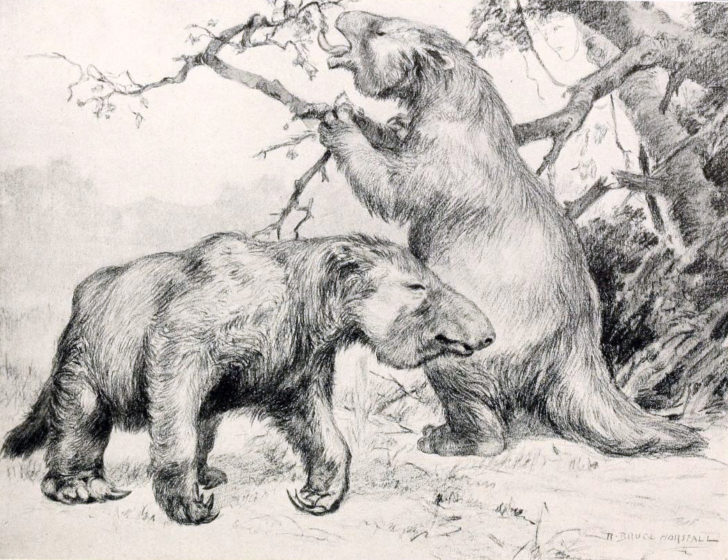 In South America, giant sloths—some the size of elephants—roamed the surface, and were, perhaps, expert tunnel diggers. (Credit Wikimedia Commons)