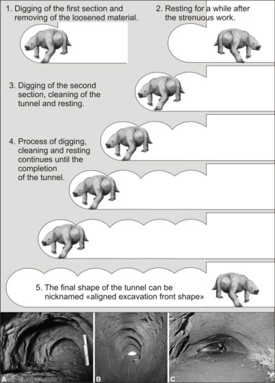Some believes the burrows were dug by a genus of giant ground sloths, as large as modern elephants, that once lived in South America. Because they were some of the biggest land mammals on earth exceeded in size only by the mammoth.