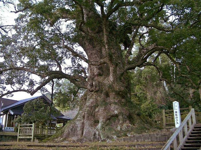 The Oriental Lion The World S Largest Redwood Sculpture