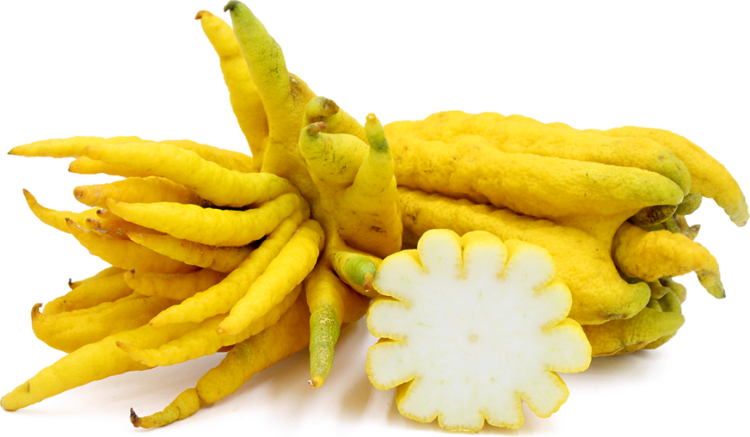 The fingered citron is unusually shaped citron variety whose fruit is segmented into finger-like sections, resembling a human hand.