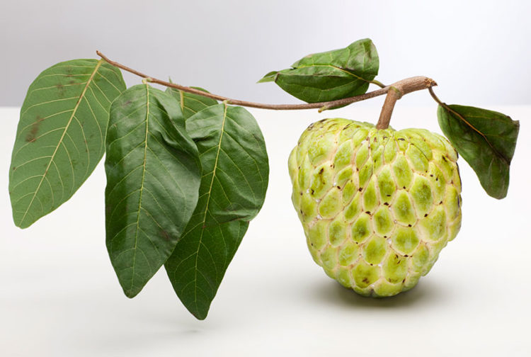 The sugar apple is a strange fruit, which taste is just like a pineapple-banana combo.