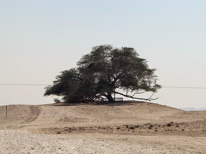 The average temperature in the region is 105 degree Fahrenheit often soaring to 120 degree, and bone stripping sandstorms are common. Image credit Chris Price