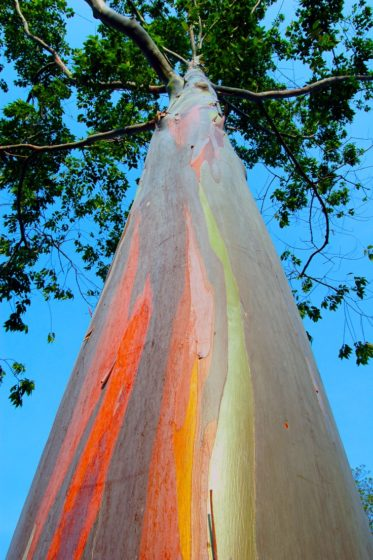 The peeling process results in vertical streaks of red, orange, green, blue and gray.