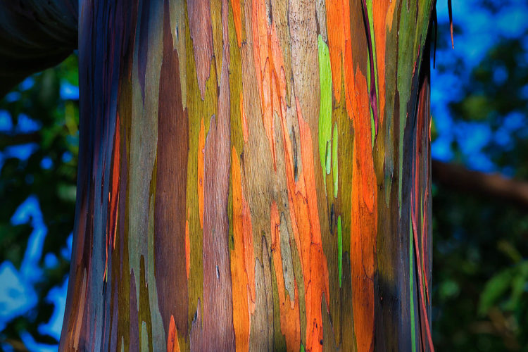 It thrives in tropical forests that get a lot of rain. This painted forest, Secret Marvels of the World says, is simply astonishing.