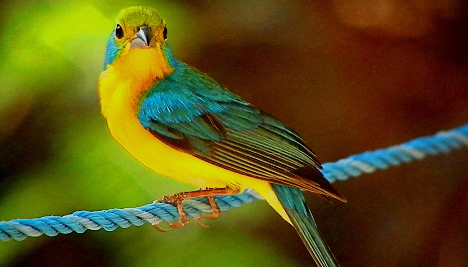 This species has a sweet, lilting song that you might enjoy.
