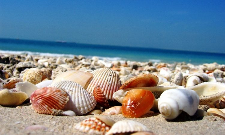 Shell Beach is a beach in the Shark Bay region of Western Australia, on the northeastern side of the Taillefer Isthmus along the L'Haridon Bight.