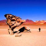 Stone Trees of Bolivia