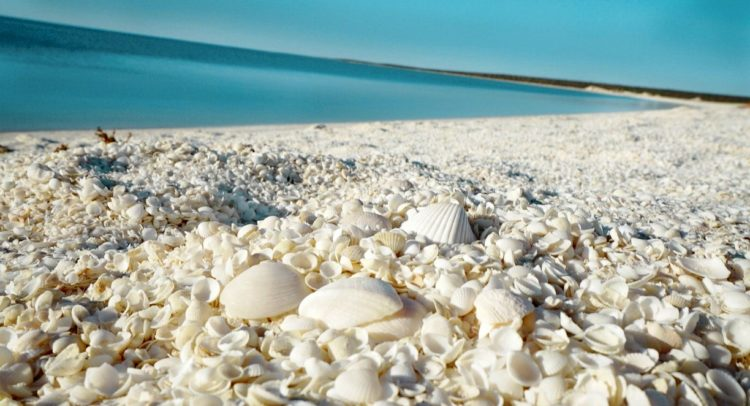 The shells have formed a limestone that is acknowledged as coquina. However, before Shark Bay became a World Heritage Site, the coquina was mined and used for the construction of a number of buildings in Denham.