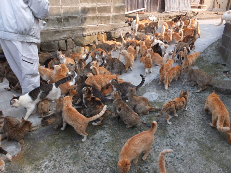 """Aoshima island, is famous as """"Cat Island"""", actually a small island, where there are expressively more feline residents than people and inhabited by 15 people and hundreds of cats."""