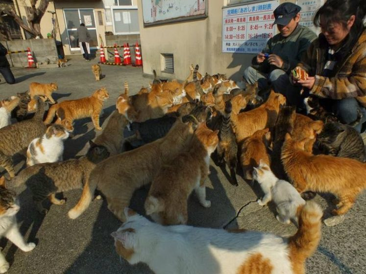 """The island wasn't always so deserted, nor was it recognized as being a """"cat paradise."""" Image credit Hal Arai"""