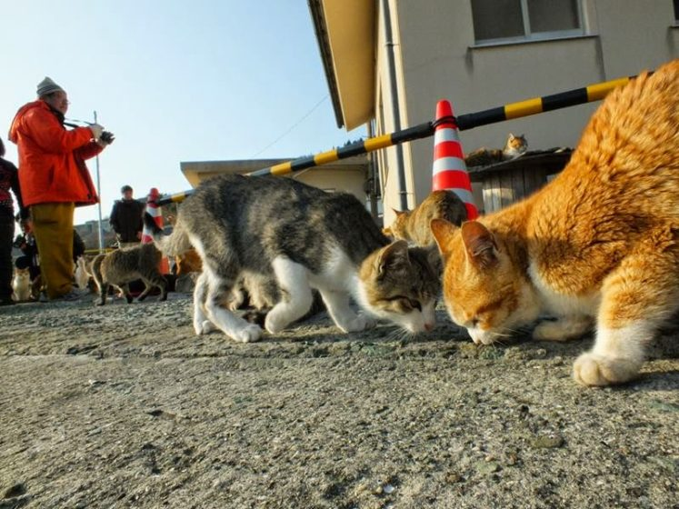 Cat Island is home to over 100 cats of all different breeds, which can be found lounging around and acting generally lazy in true feline fashion. Image credit Hal Arai