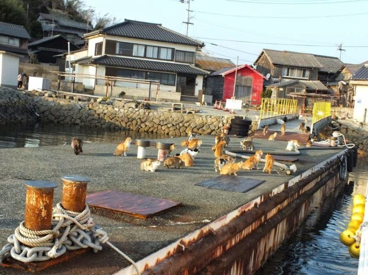 One nurse is stationed full-time on the island, but residents must board a ferry to Nagahama Port (near JR Iyonagahama Station) in Ozu City to do all of their shopping. Image credit Hal Arai
