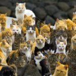 Aoshima, The Cat Island