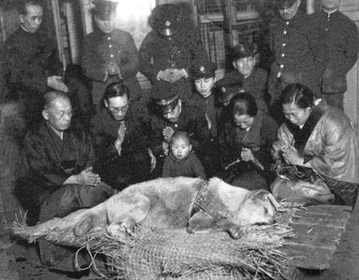 The last photo have ever taken of Hachiko Dog who waited for 9 years after the death of his master outside the train station every morning until he himself passed away in 1920's.