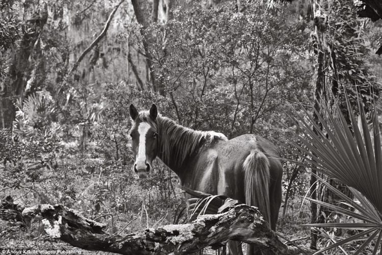 Photographer Anouk Masson Krantz shot her book The Wild Horses of Cumberland Island over 10 years