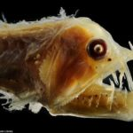 World's Strangest Sea Creatures