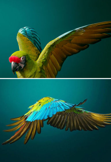 28. Military Macaw