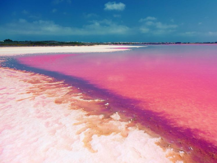 In southwest Spain lie two salty and very pink lakes called Las Salinas de Torrevieja. The color is caused by algae that releases a red pigment under certain conditions.