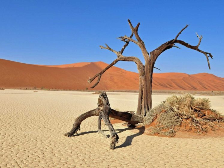 Namibia's Dead Vlei, or dead marsh, is surrounded by the highest sand dunes in the world and dotted with dead trees more than 900 years old.