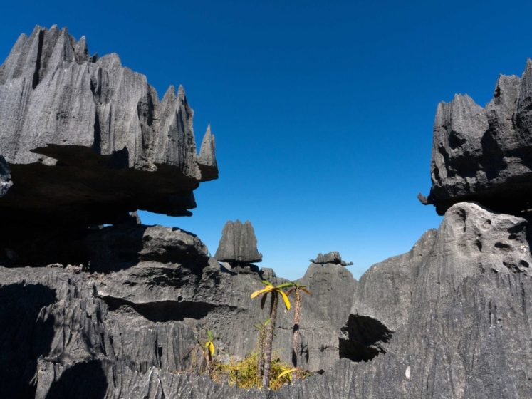 Tsingy de Bernaraha National Park in Madagascar is a UNESCO World Heritage Site. The forest of limestone needles was made when underground water eroded the existing limestone.