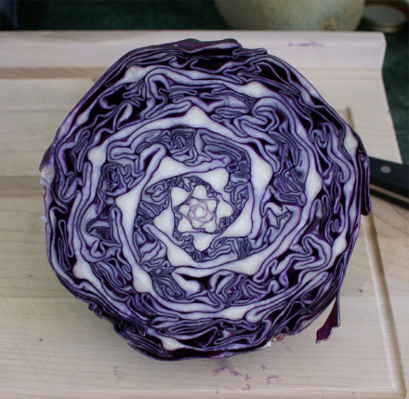 Breathtaking Natural Geometry in Cabbage