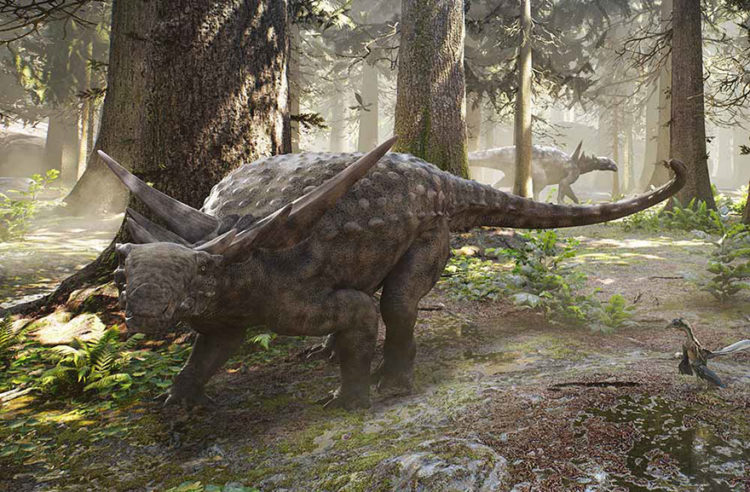 This is a replica of how nodosaurs must have looked Photo Credit Herschel Hoffmeyer