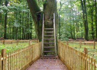 "In Germany a 500 year old tree called ""The Bridegroom's Oak"" in the Dodauer Forst forest near of Eutin, has its own postal address and actually receives about 5 to 6 letters every day."
