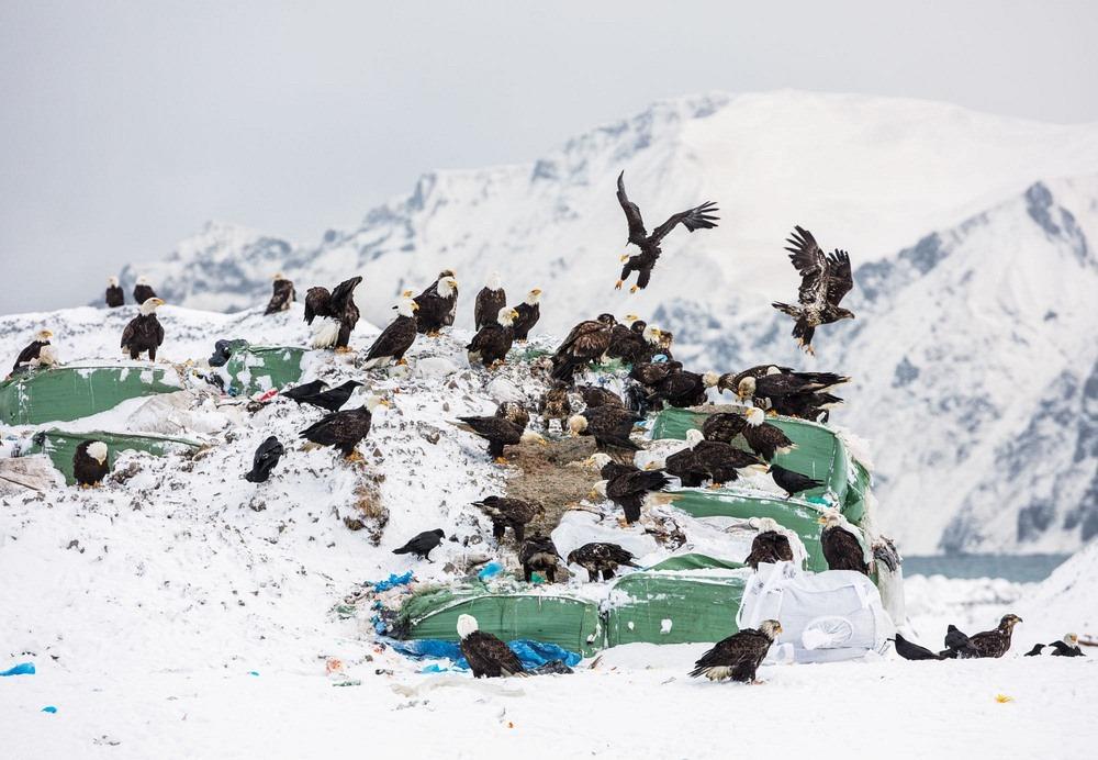 Unalaska is located on Unalaska Island and neighboring Amaknak Island in the Aleutian Islands off mainland Alaska.
