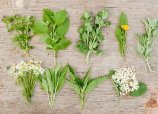 The Ultimate Secrets of Wild Herbs