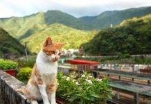 Since, number of cats living there increased got attention all parts of the world.
