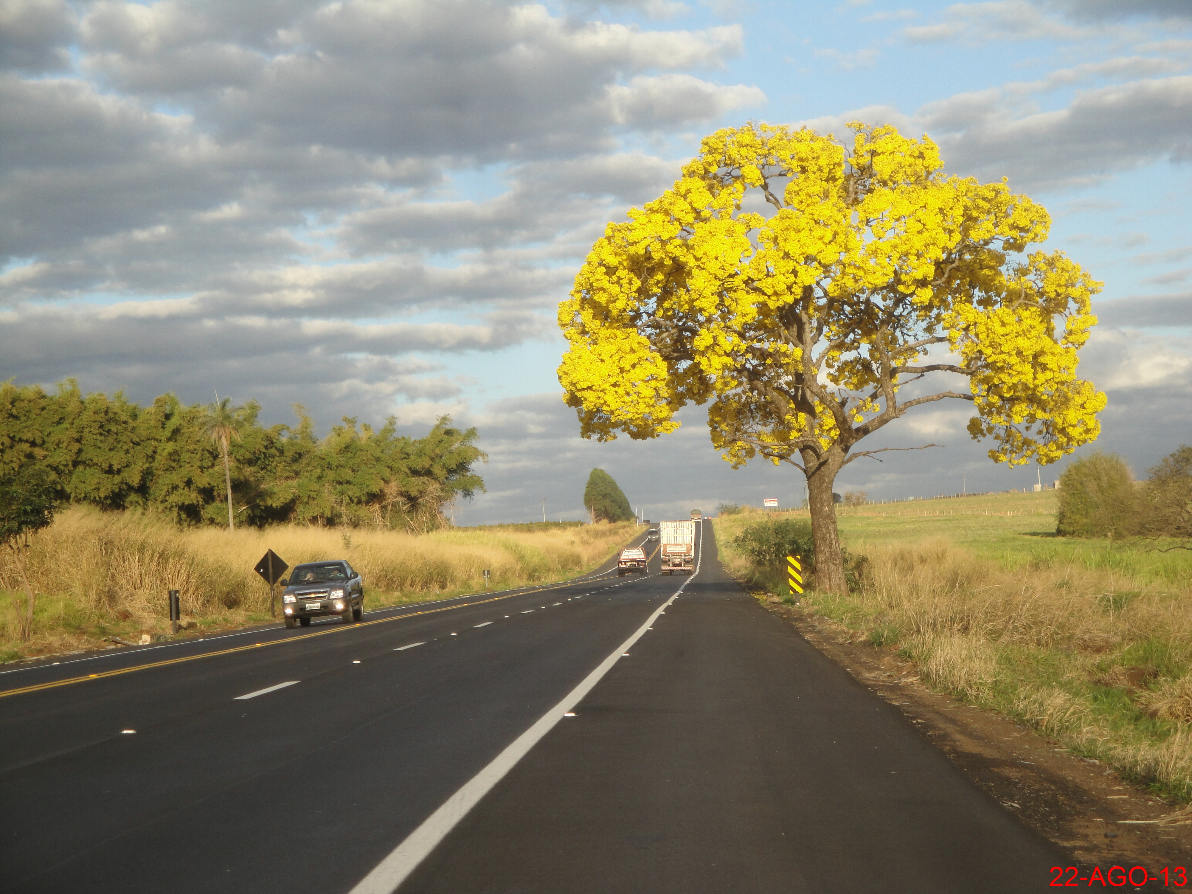 Tabebuia trees are attractive and adjust too many growing conditions. Adding this tree to your landscape is worth as the rewards are great and the care is minimal.
