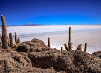 Incahuasi has a total area of 24.62 61 acres and hosts gigantic cacti and a tourist center. This area is one of best highlights of Salar de Uyuni also known as Inkawasi.