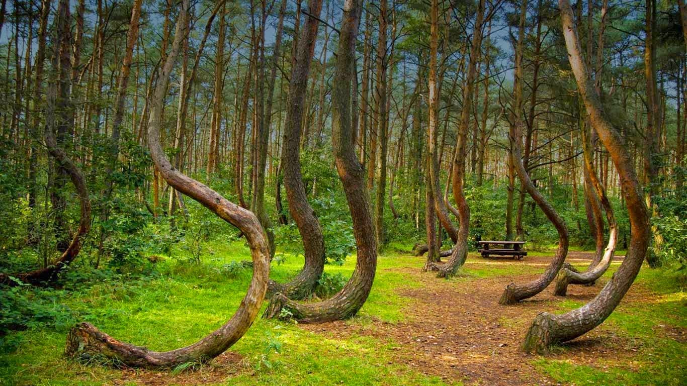 The Hoia Forest is a forest situated to the west of the city of Cluj-Napoca, near the open-air section of the Ethnographic Museum of Transylvania.